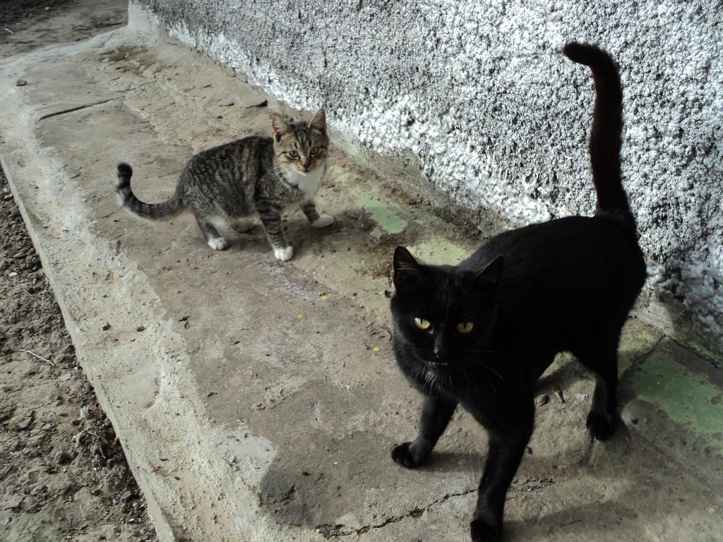 Кошки За ЕдУ