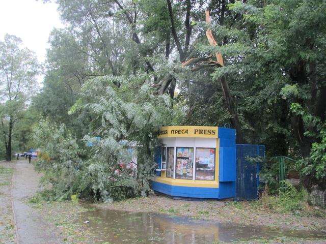 Киоск прессы под рухнувший деревом