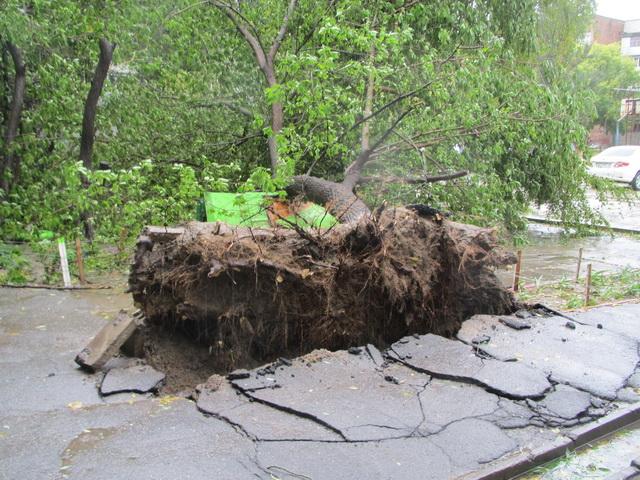 Дерево упало на скамейку, выворотив асфальт