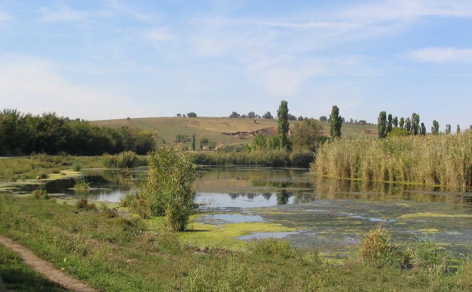 Река Молочная у Молочанска. Природа!