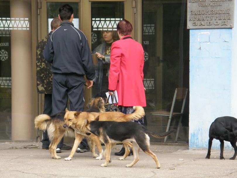 Центральная проходная давно не работает. Собак больше чем людей. Фото ВВП
