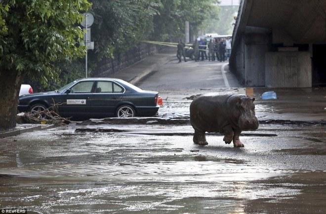 5894243-zoopark-v-tbilisi-nadeetsya-na-pomosch-