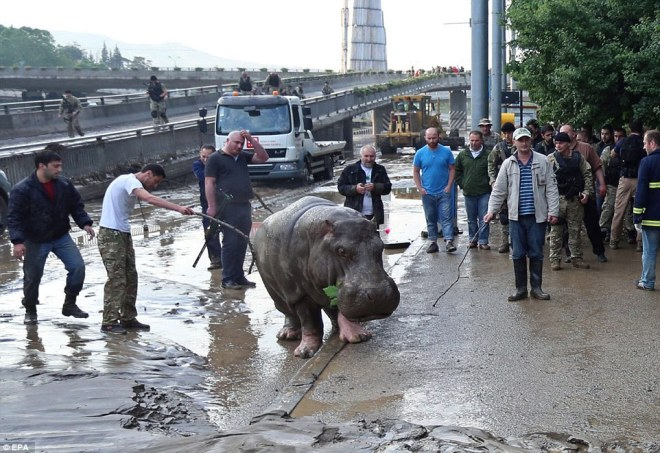 5894251-zoopark-v-tbilisi-nadeetsya-na-pomosch-