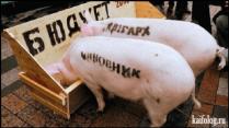 свиньи-чиновники