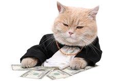 банк котяра